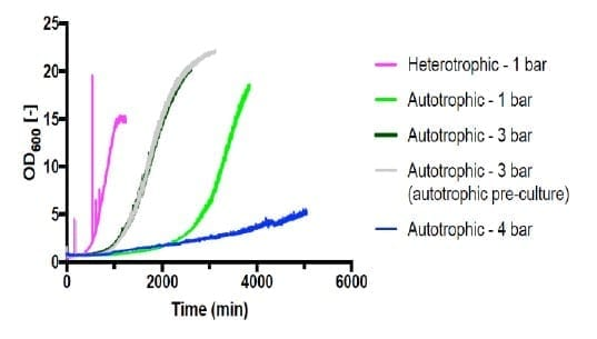 Figure 4 – Growth curve of C. necator H16 in gas fermentation and during heterotrophic growth